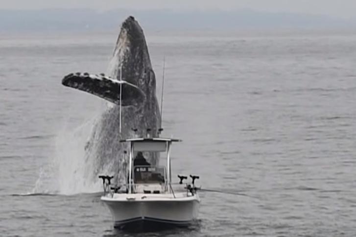 Фото №1 - Гигантский кит вдруг выпрыгнул из воды возле ни о чем не подозревающего рыбака (эпичное видео)