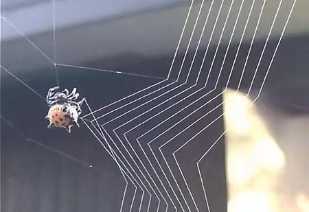 В Сети появилось видео, где паук-кругопряд плетет паутину, и оно идеально!