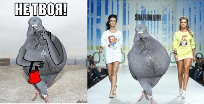 Мемы недели: ВДВ, гороскопы, Ваенга