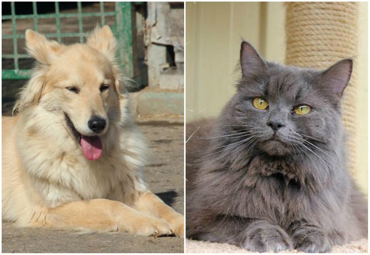 Фото №1 - Котопёс недели: возьми из приюта собаку Бьюти или кошку Тринити