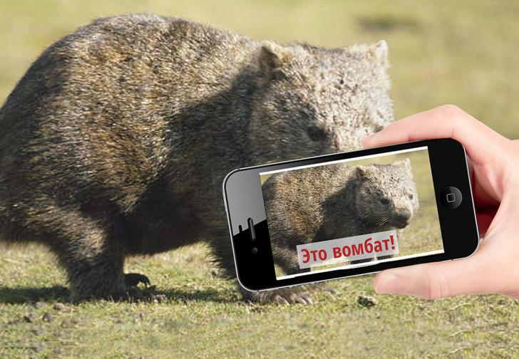 Фото №1 - Новое приложение — Shazam для окружающей природы!