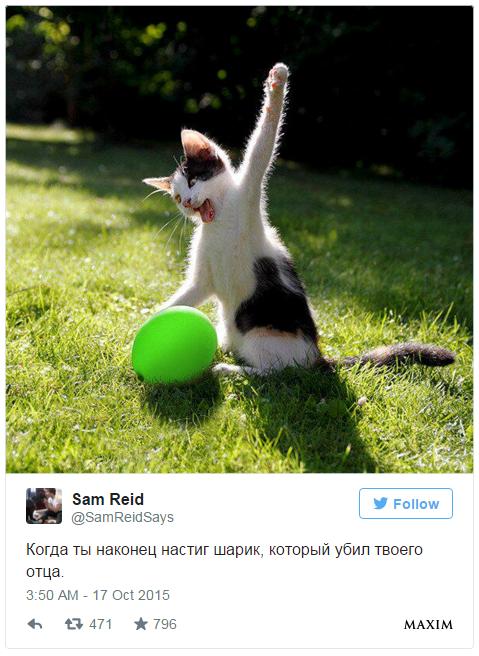Фото №3 - 10 самых смешных твитов недели со всего света!