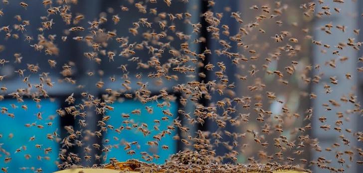 Фото №1 - Пчёлы захватили киоск с хот-догами прямо посреди Нью-Йорка (видео)
