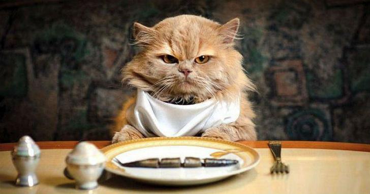 Фото №1 - Тест: Хорошо ли ты знаешь кулинарию