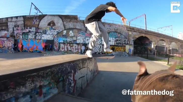 Фото №1 - Пёс-кинооператор снимает скейтбордистов (ВИДЕО)
