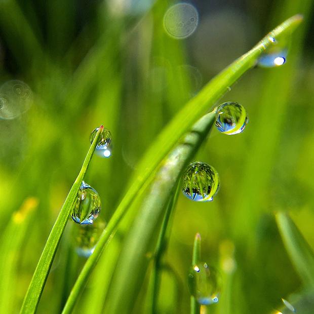 Фото №6 - Вода как воля и представление: несколько научных фактов, которые перевернут твое представление о воде
