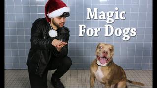 Американский фокусник показал трюки животным в приюте (видео)