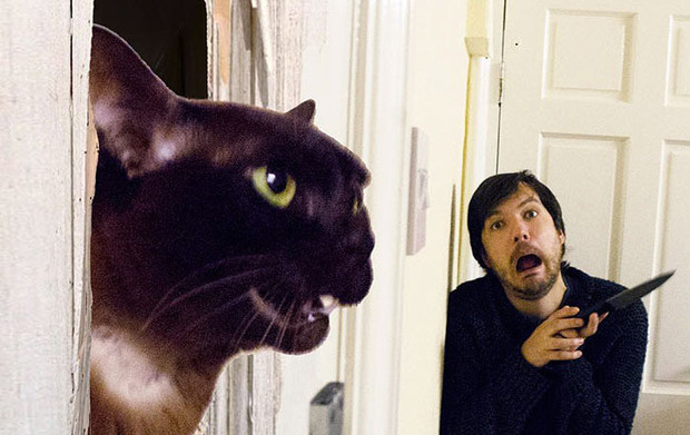 Фото №4 - Очень смешной «Инстаграм» с котиками, воссоздающий культовые сцены из фильмов!