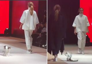 Кошка забралась на подиум во время показа и составила достойную конкуренцию моделям (видео)