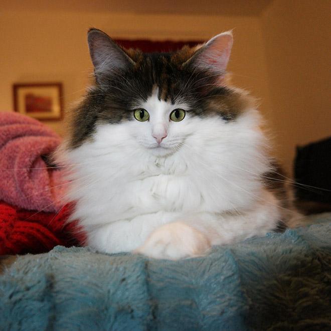 Фото №6 - Коты с крошечными мордами!