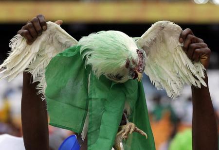Вероломное попрание прав болельщиков! Нигерийцам запрещают приносить на стадионы куриц!