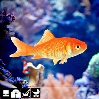 Фото №23 - Как выбрать домашнее животное в зависимости от типа твоего характера и размеров жилплощади