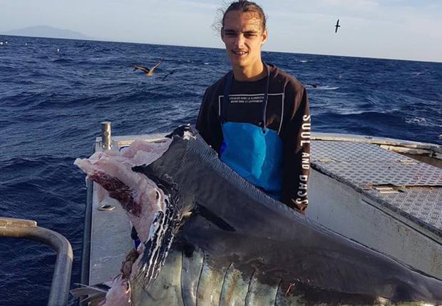Фото №1 - Австралийский рыбак выловил голову огромной акулы, которую, похоже, сожрало нечто еще большего размера