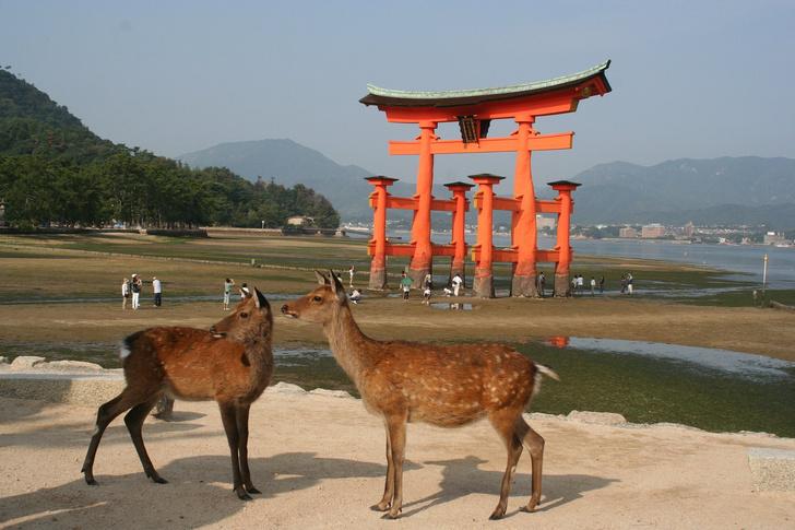 Фото №1 - Японские поезда будут лаять на оленей