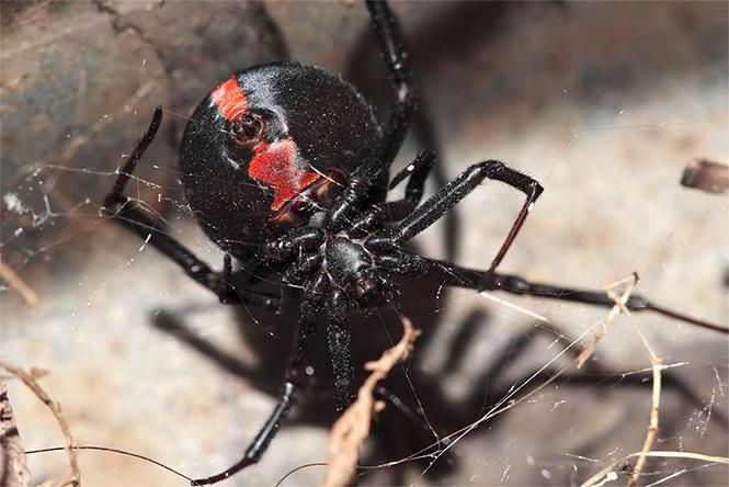 Ядовитый паук совершил нападение в биотуалете на стройплощадке