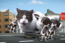 Кошачья галлюцинация