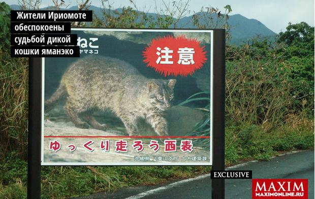 Фото №20 - Как Окинава стала островом с самым высоким в мире процентом долгожителей