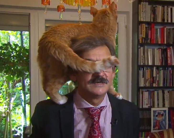 Фото №1 - Кот перетянул на себя внимание во время телеинтервью! Умильное ВИДЕО