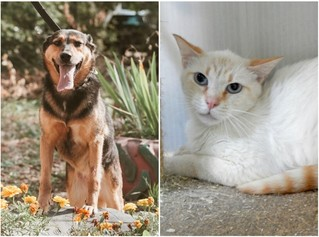 Котопёс недели: возьми из приюта космического кота Сириуса или игривую собачку Мару