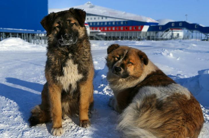 Фото №5 - Айда в виртуальный тур по российской арктической базе!
