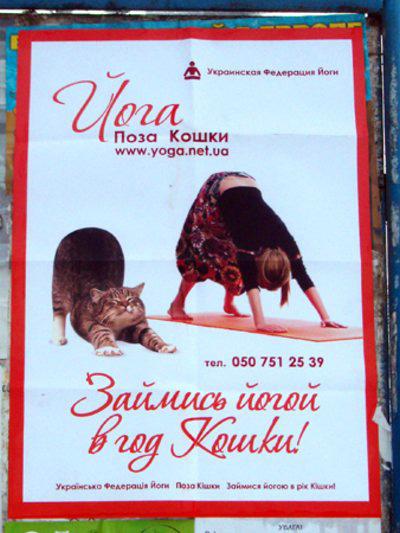 Фото №1 - MAXIM Йога. Поза кошки