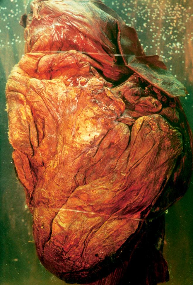 Сердце мамонта