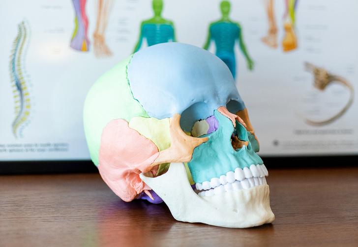Фото №1 - Ученые заявили, что из-за использования смартфонов у людей начала меняться форма черепа