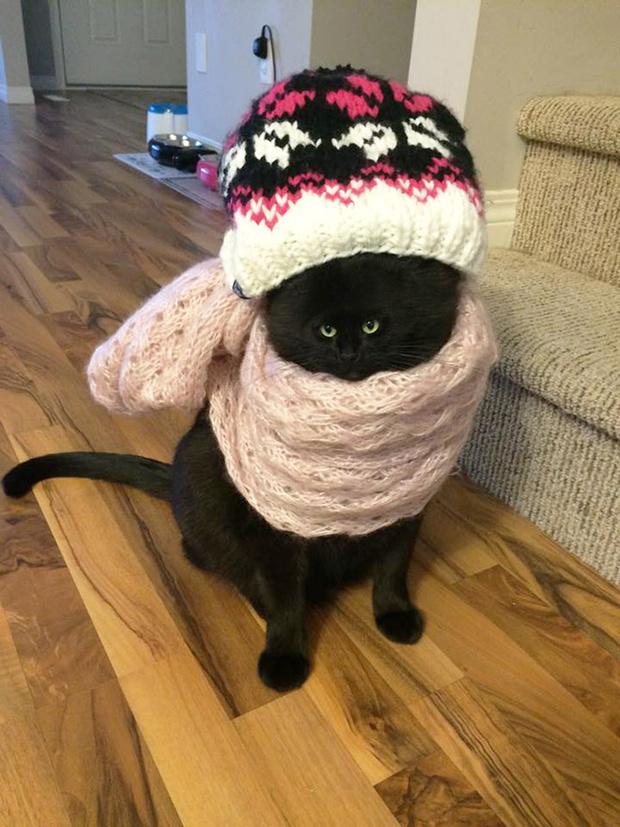 Фото №15 - Коты с крошечными мордами!