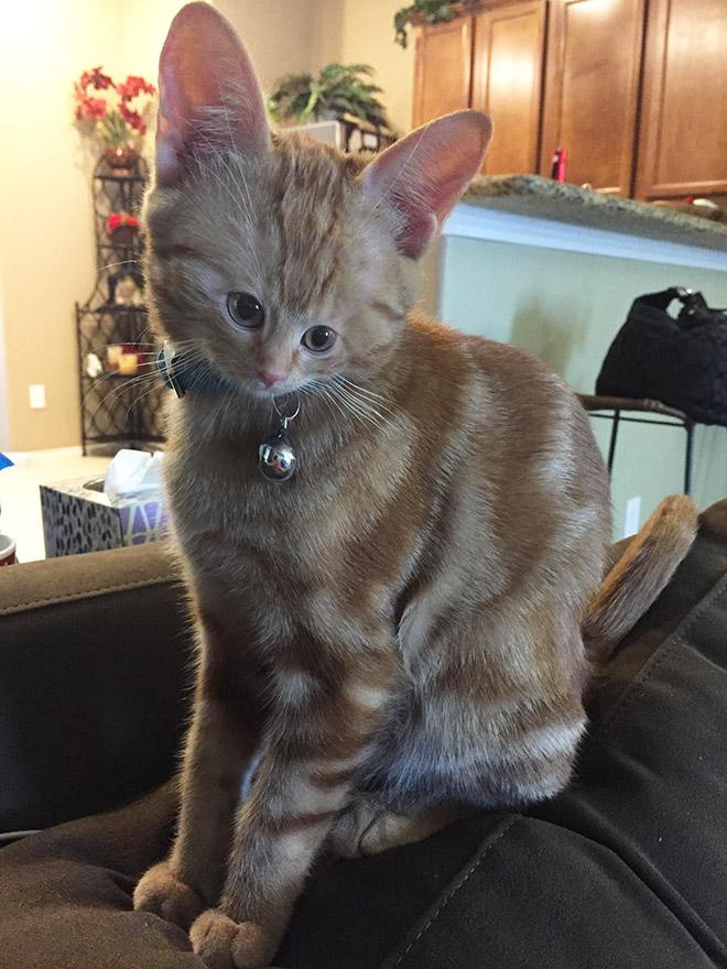 Фото №3 - Коты с крошечными мордами!