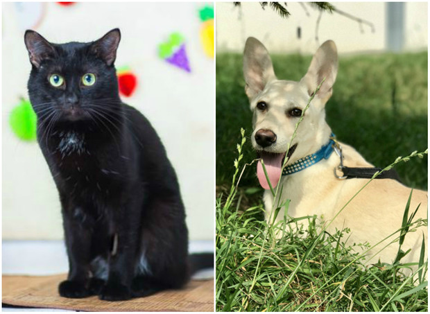 Фото №1 - Котопёс недели: возьми из приюта пса Арона или кота Марека