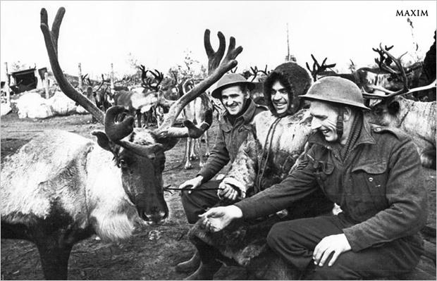 Фото №7 - Зверский героизм: горящие свиньи, противотанковые мыши и другие животные, повлиявшие на исход ВОВ