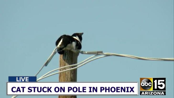 Фото №1 - Как в Фениксе два часа спасали кота