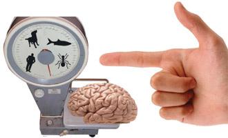 Почему нашему мозгу свойственно ошибаться