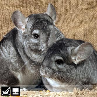 Фото №12 - Как выбрать домашнее животное в зависимости от типа твоего характера и размеров жилплощади