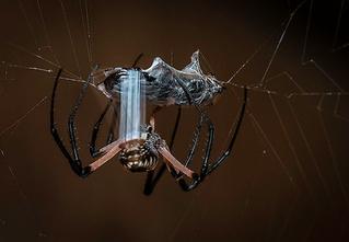 Удивительные свойства паутины