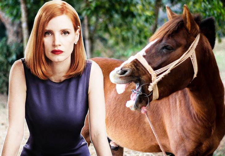 Фото №1 - Видео дня: лошадь кусает за грудь Джессику Честейн
