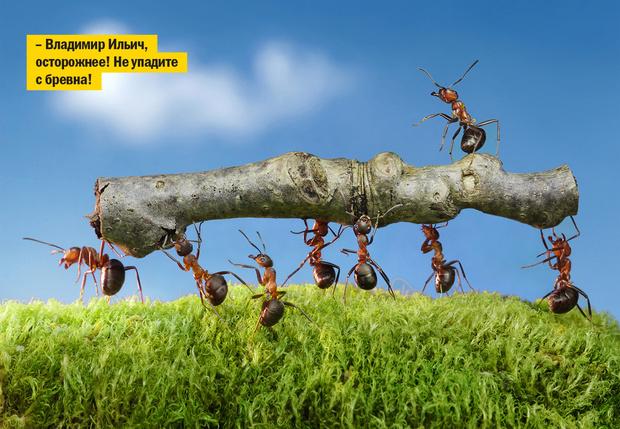Фото №1 - Оказывается, муравьи вовсе не любят работать, выяснили ученые