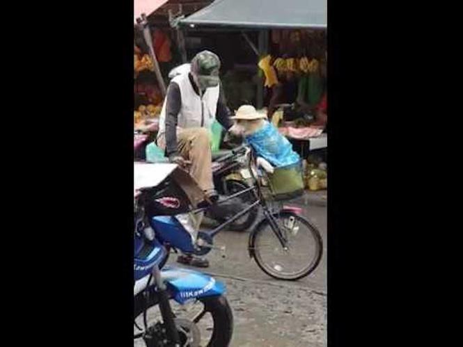 Как подготовить собаку к дождю. Инструкция от жителя Филиппин (ВИДЕО)