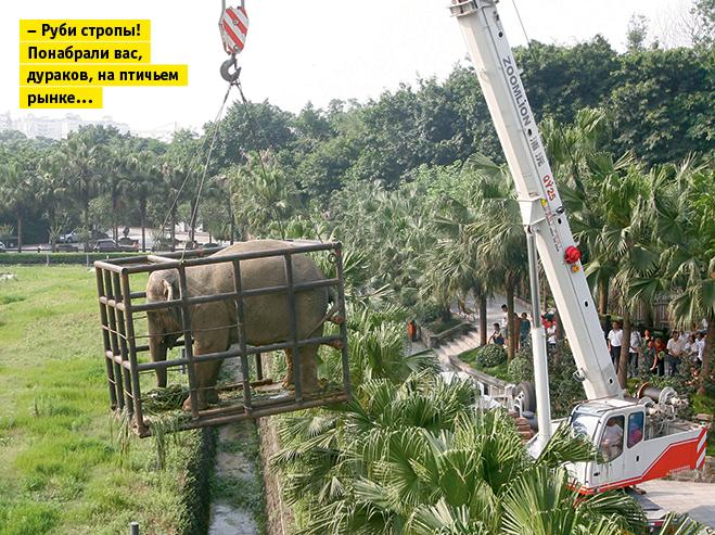 Фото №15 - Слонопотамия. 13 фотоисторий из жизни слонов