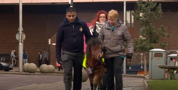 Фото №2 - Милота дня! В Великобритании подготовили первого пони-поводыря