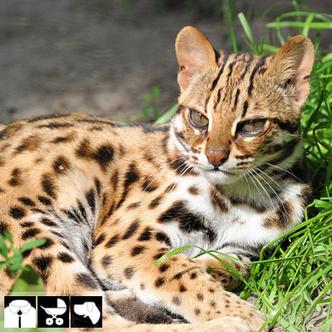 Фото №6 - Как выбрать домашнее животное в зависимости от типа твоего характера и размеров жилплощади