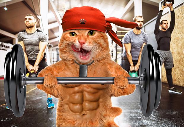 Фото №1 - Видео дня: кот, качающий пресс