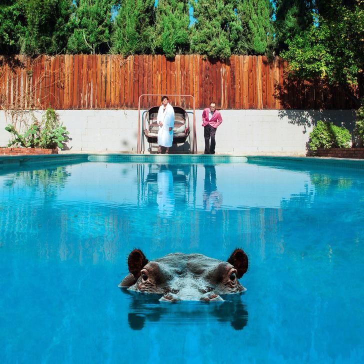 Фото №2 - Hippopotamus от Sparks и другие главные альбомы месяца