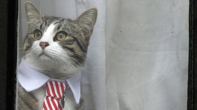 Фото №4 - Джулиану Ассанжу строго наказали кормить кота и мыть после себя ванную