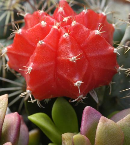 Фото №1 - Вырастить кактус