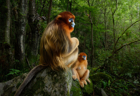 Финалисты и победители фотоконкурса Wildlife Photographer of the Year 2018 (галерея)