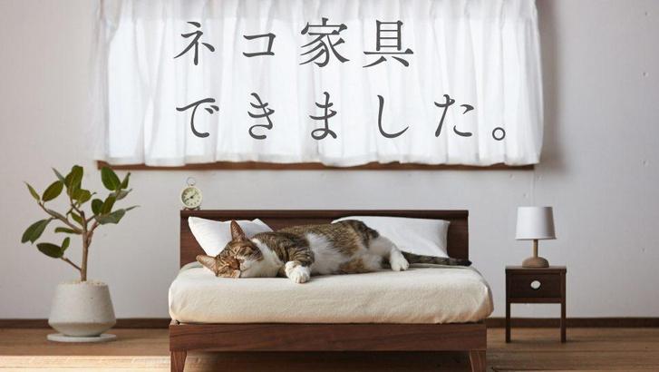 Фото №1 - Золотой век мебели для животных (галерея)