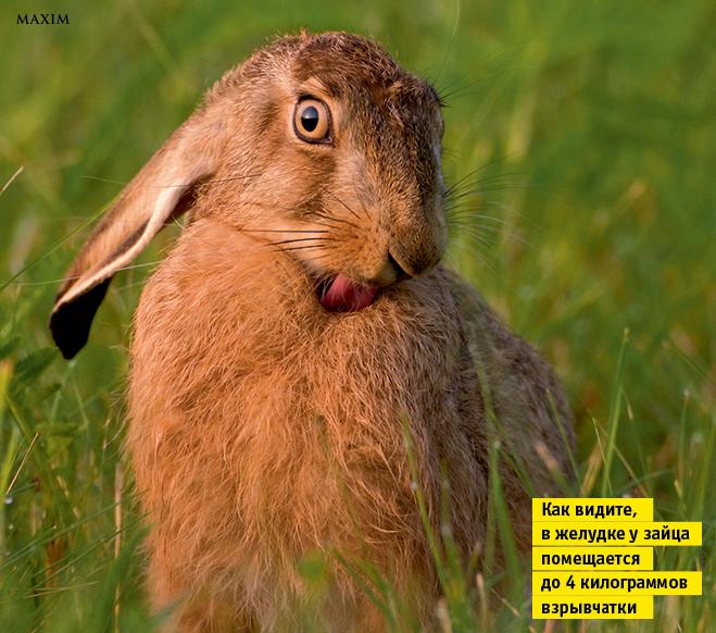 Фото №8 - Лики рыл. 10 фотографий, на которых животные строят рожи