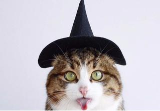 Кот, который языком вытворяет тако-о-ое! Смотри и учись!