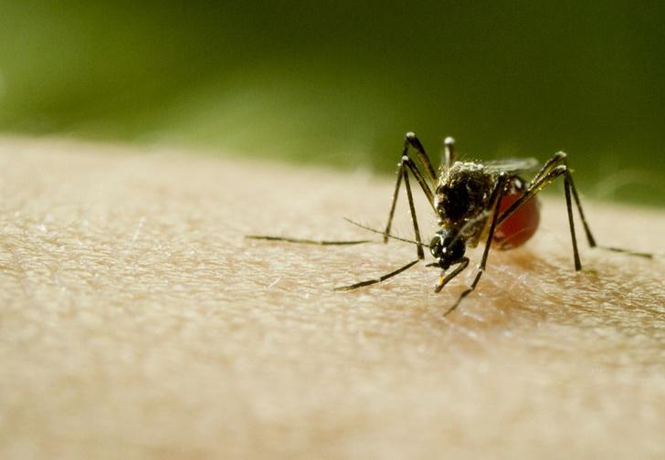 Фото №2 - Москитный флот: 5 важных фактов о комарах